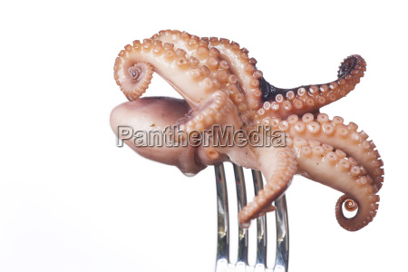 squid on a fork on white