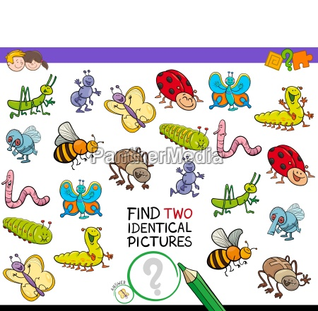 find two identical bug pictures game