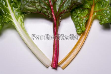 rainbow swiss chard mangold beetroot leaves