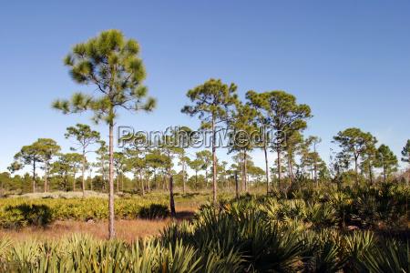 tree trees park american usa america