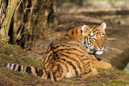 danger animal mammal asia wild strong