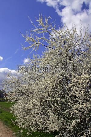 bloom blossom flourish flourishing bushes blossoms