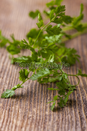 fresh chervil on dark wood