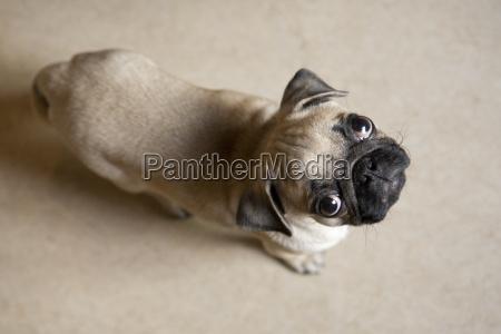 animal pet animals pets black swarthy