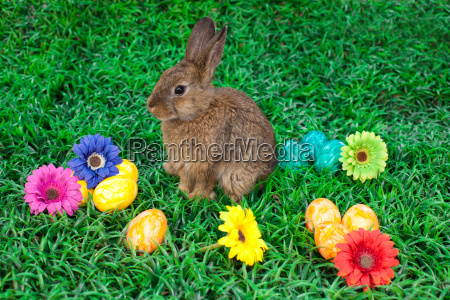 easter eggs and little bunny