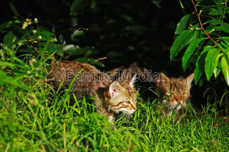animal mammal fauna animals cats mammals