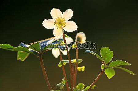 leaf bloom blossom flourish flourishing leaves