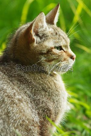 profile closeup animal mammal fauna animals