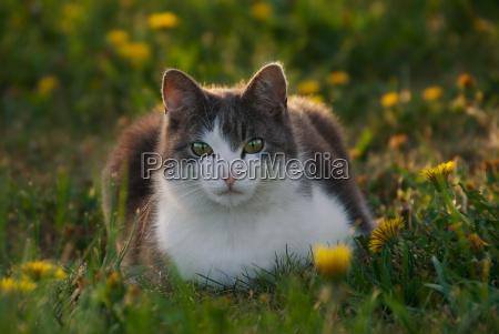 animal mammal flower plant animals look