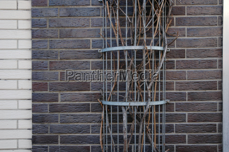 protected sheltered brown brownish brunette branches