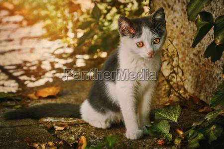 sad homeless kitten