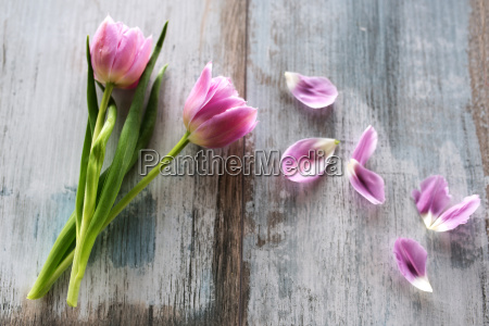 spring tulips in vintage style on