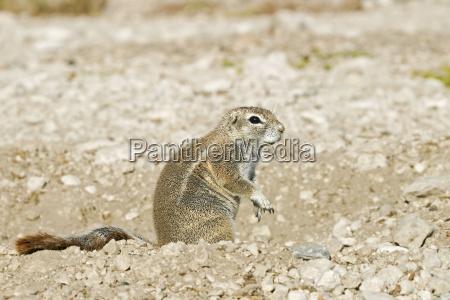 park animal mammal fauna national park
