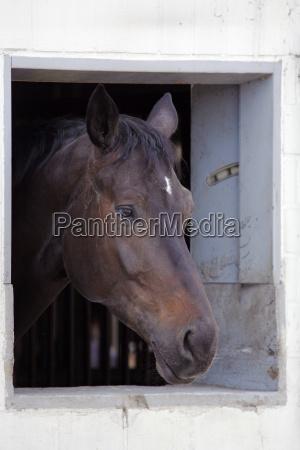 horse window porthole dormer window pane