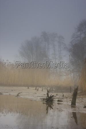 donaualtarm in the fog danube meadows
