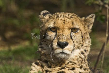 animal mammal fauna animals portrait big