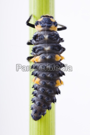 animal insect insects fauna animals beetle