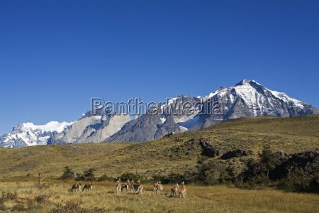 mountains park american animal mammal fauna