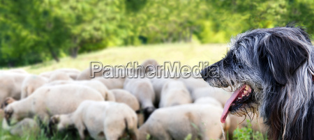 agricultural agriculturally animal mammal animals agriculture