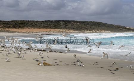 waters flies animal bird fauna animals