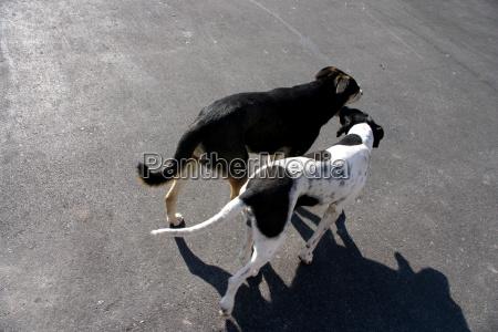 animal mammal fauna animals dog dogs