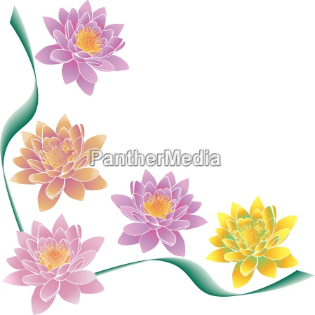 multi colored lotuses and green strips