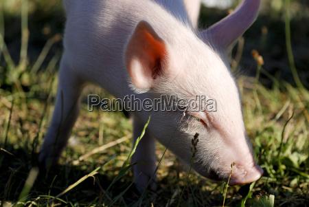 closeup animal mammal fauna animals portrait