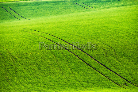 green spring hills rolling spring fields