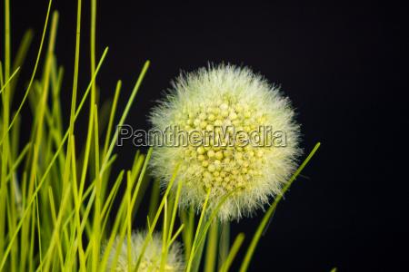 art grasses