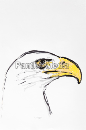 head of an eagle drawing arter