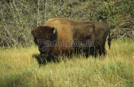 american animal mammal fauna national park