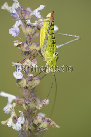 detail closeup animal insect insects fauna