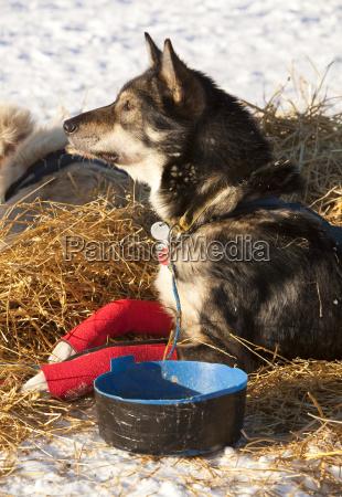 connected american winter animal mammal fauna