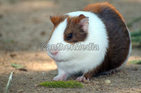 animal pet mammal fauna africa animals