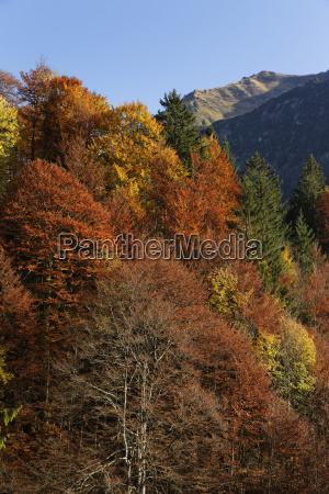 autumnal mixed forest at hoelltobel municipality