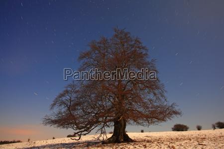 solitare hutebuche in winter long exposure