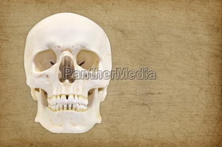 isolated optional medicinally medical studio photography