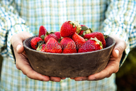 fresh strawberries in farmers hands