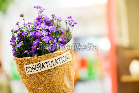 beautiful violet or purple gypsophila flower