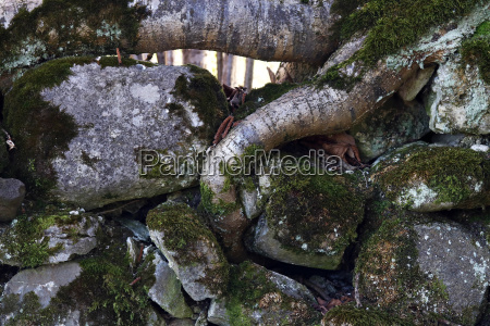the thick roots of a tree