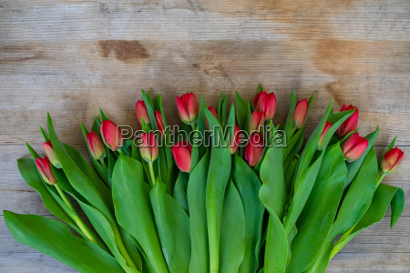 a bunch of tulips lies on
