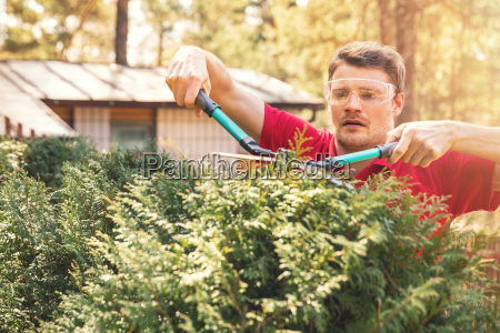 man cutting thuja hedge with garden