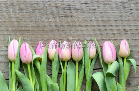 top view of pink tulips on