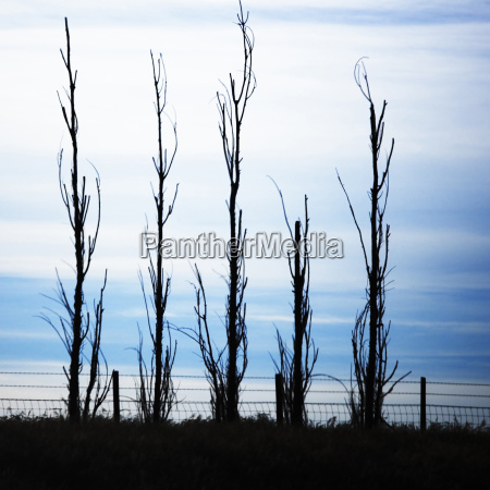 wire fence and four trees without