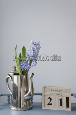 flower decoration in january hyacinth in