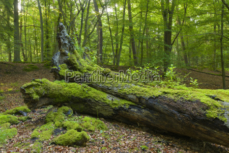 old fallen tree trunk covered in