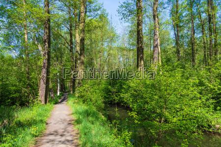 landscape in the spreewald near luebbenau