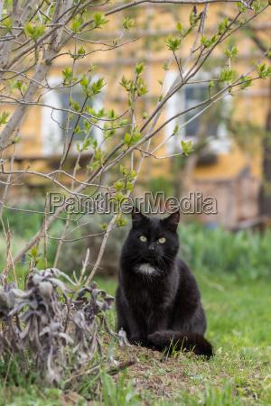 cat is sitting outdoor