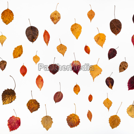 pattern from various fallen autumn leaves