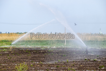 irrigation system in field of melons